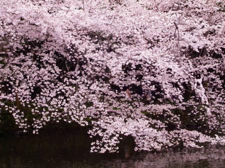170409_mishima008.jpg