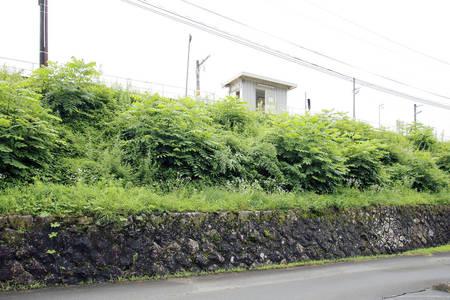 飯島町_iijima_003.jpg